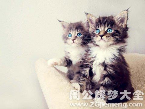 孕妇梦见猫.jpg