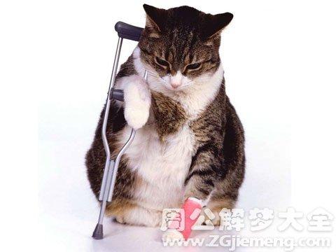 梦见猫受伤.jpg