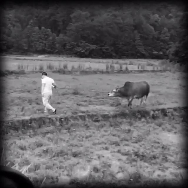 农村小孩放牛撞鬼!一次极其恐怖的经历!