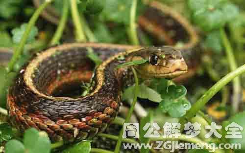 女人梦见蛇.jpg