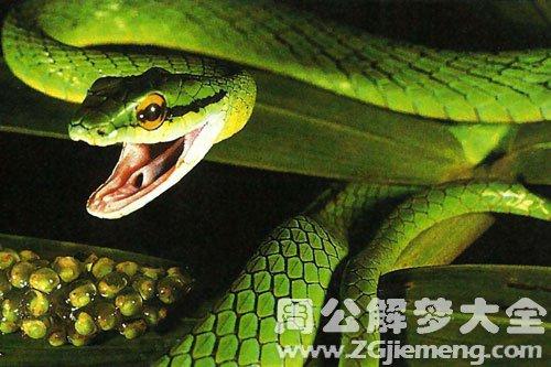 孕婦夢見蛇