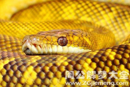 孕妇梦见大蛇