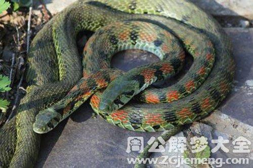 孕妇梦见很多蛇