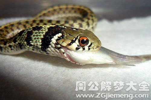 做梦梦到白色的蛇_孕妇梦见蛇和鱼_大鱼解梦网