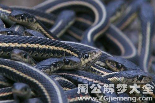 梦见很多蛇