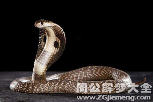 夢見眼鏡蛇