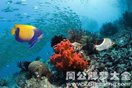 梦见海洋生物