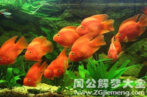魚缸里有很多魚