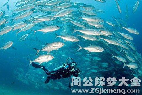 魚群在水里游