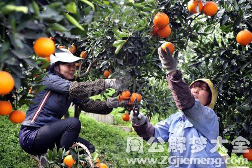 果园里摘果子