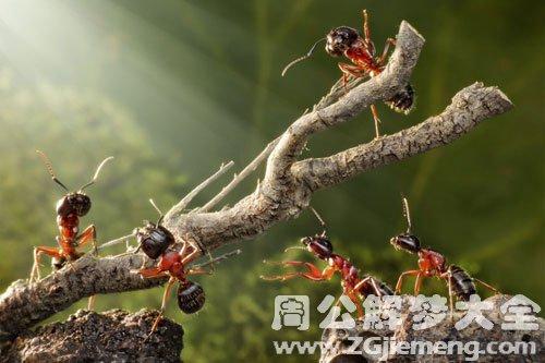 身上爬了很多蚂蚁
