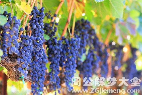 女人夢見很多葡萄