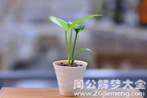 种盆栽植物