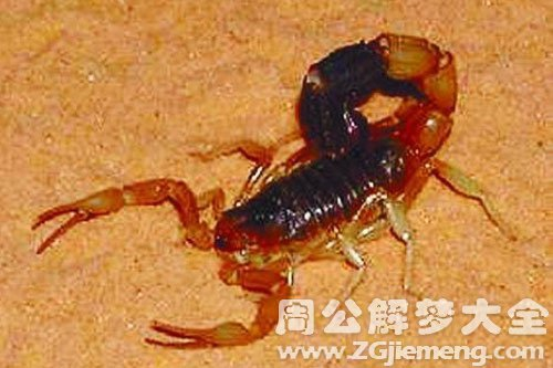 梦见蝎子_梦见红蝎子是什么意思_梦到红蝎子好不好_大鱼解梦网