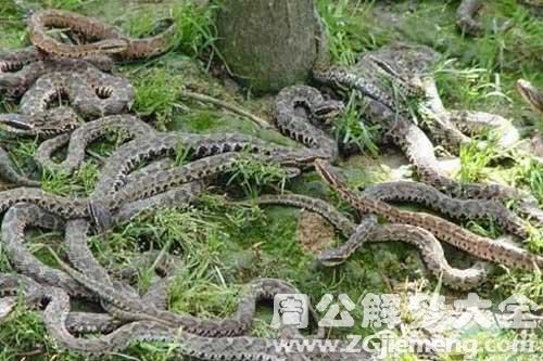 夢見蛇在房頂上