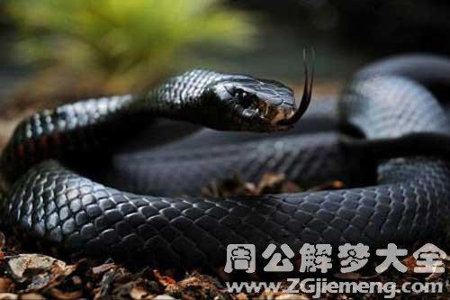 孕妇梦见救蛇