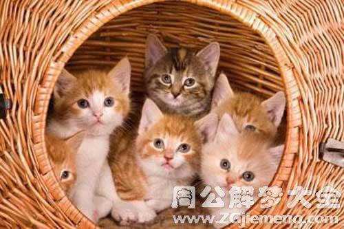 梦见五只猫