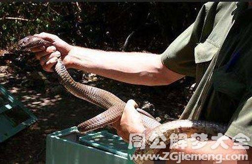 孕婦夢見別人把蛇打死