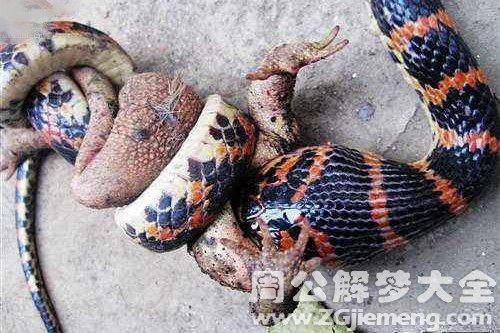 梦见小蛇吃蛤蟆