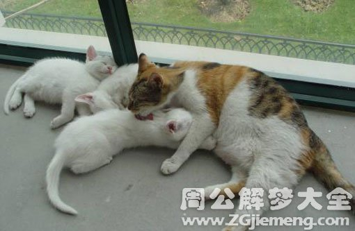 孕妇梦见生小猫