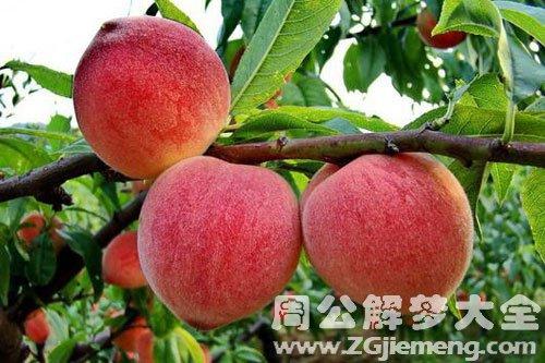 從樹上摘桃吃