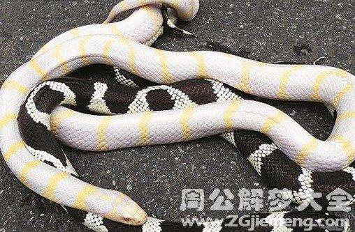 梦见黑蛇和白蛇