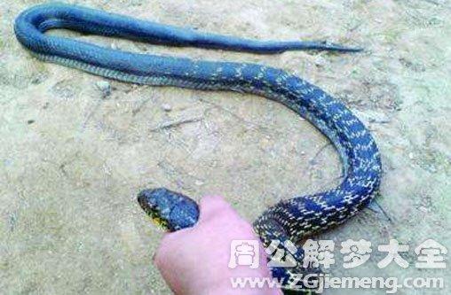 夢見抓一條大蛇