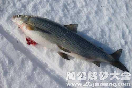 女人梦见死鱼