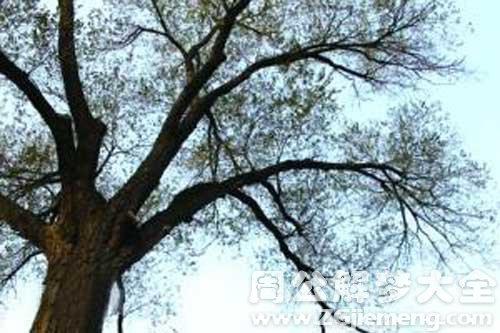 梦见掰树枝