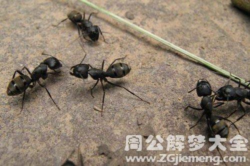 身上很多螞蟻