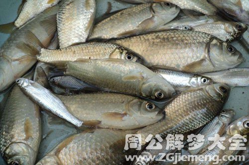 偷别人的鱼