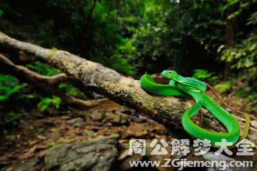 被绿色的蛇咬