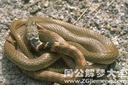 蛇与蛇打架