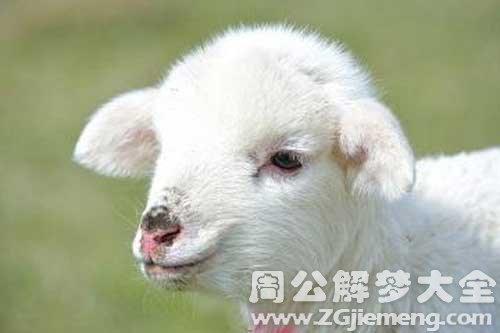 梦见羊顶自己