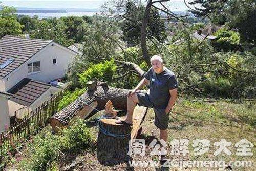 大树被锯倒