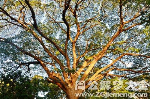 古老的大树