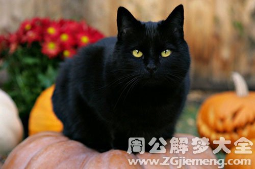 孕妇梦见大黑猫