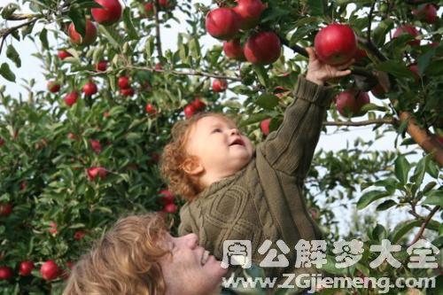 自己摘蘋果