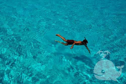 孕妇梦见在海里游泳
