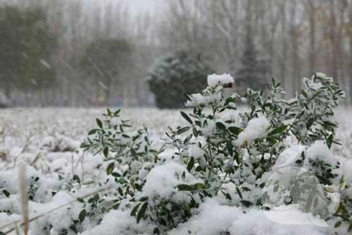 梦见下好大的雪