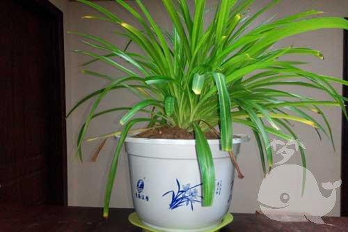 夢見綠色植物盆栽
