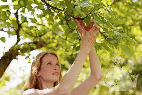 梦见从树上摘果子吃