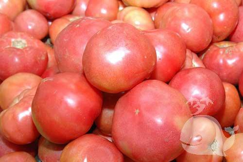 梦见好多西红柿