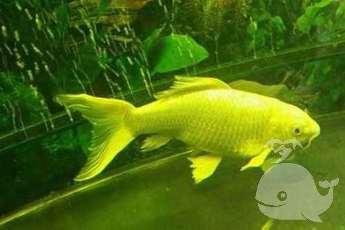 梦见鱼活过来了