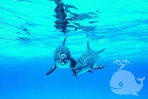 孕婦夢見魚和海豚