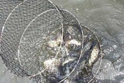 梦见河里好多鱼抓鱼