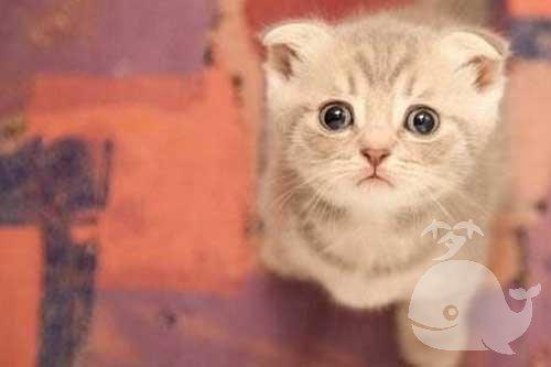 梦见救受伤的猫