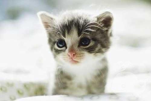 梦见一只猫往我脸上扑过来
