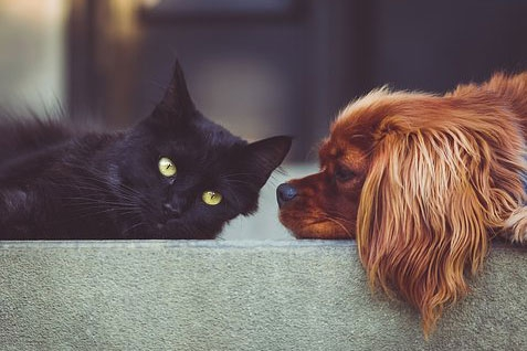梦见被猫抓咬没受伤