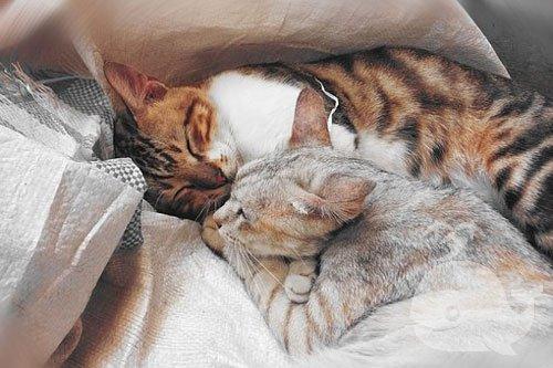 梦见猫狗兔